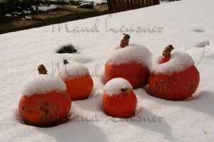Kürbisse im Schnee