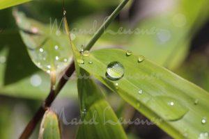Bambus mit Wassertropfen
