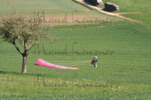 Pinker Schirm